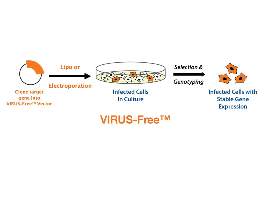 稳转构建 VIRUS-Free™