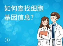 Cas9X技术课程(1)如何查找基因信息