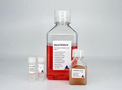 人间充质干细胞专用培养基
