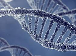 基因激活/基因沉默